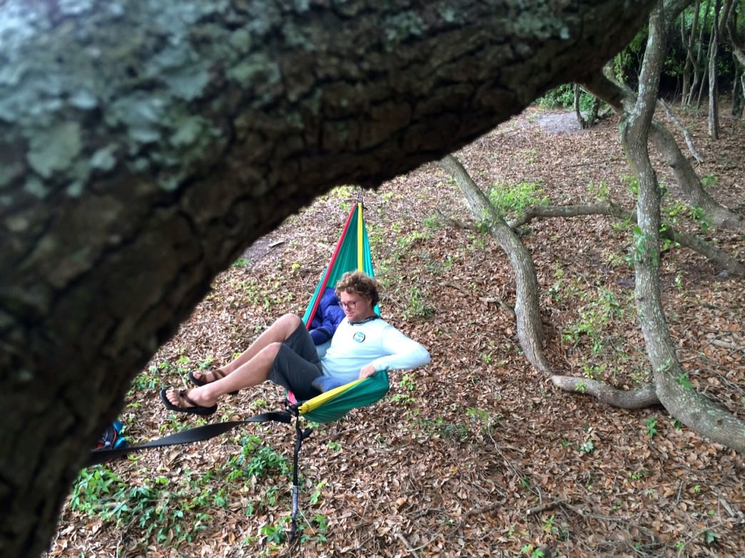 Lowcountry hammocking in a grove of Live Oaks.