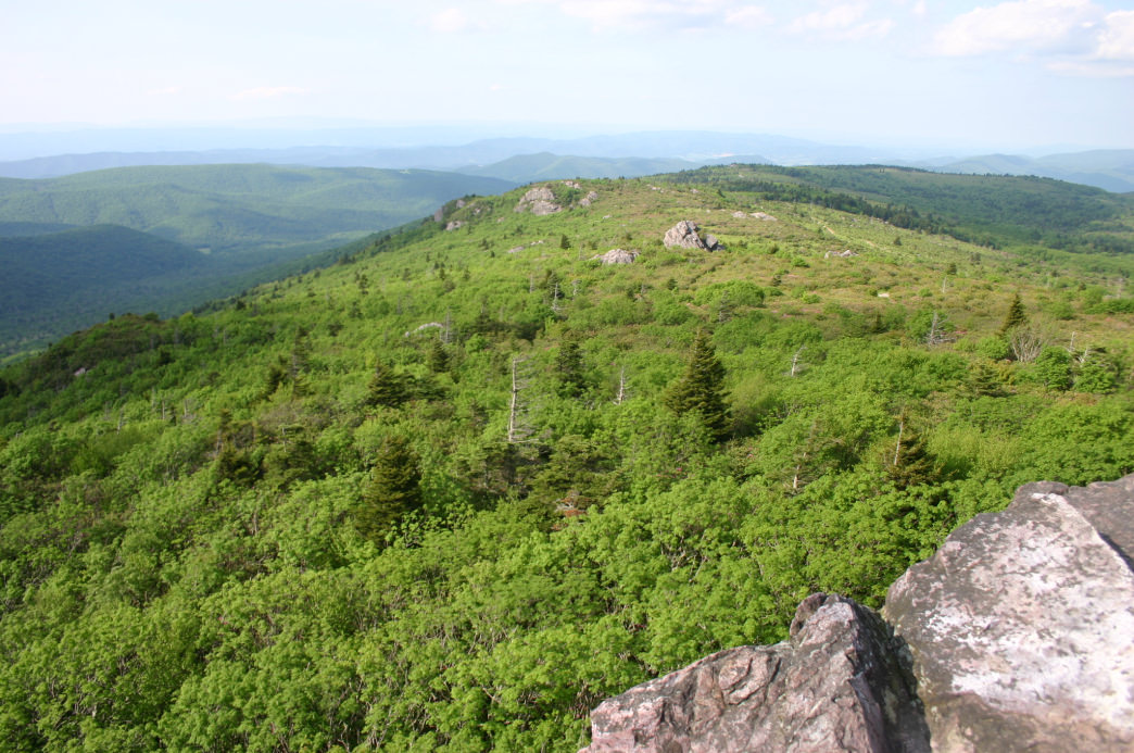 The trail to Mount Rogers offers some of the most stunning views in the region.