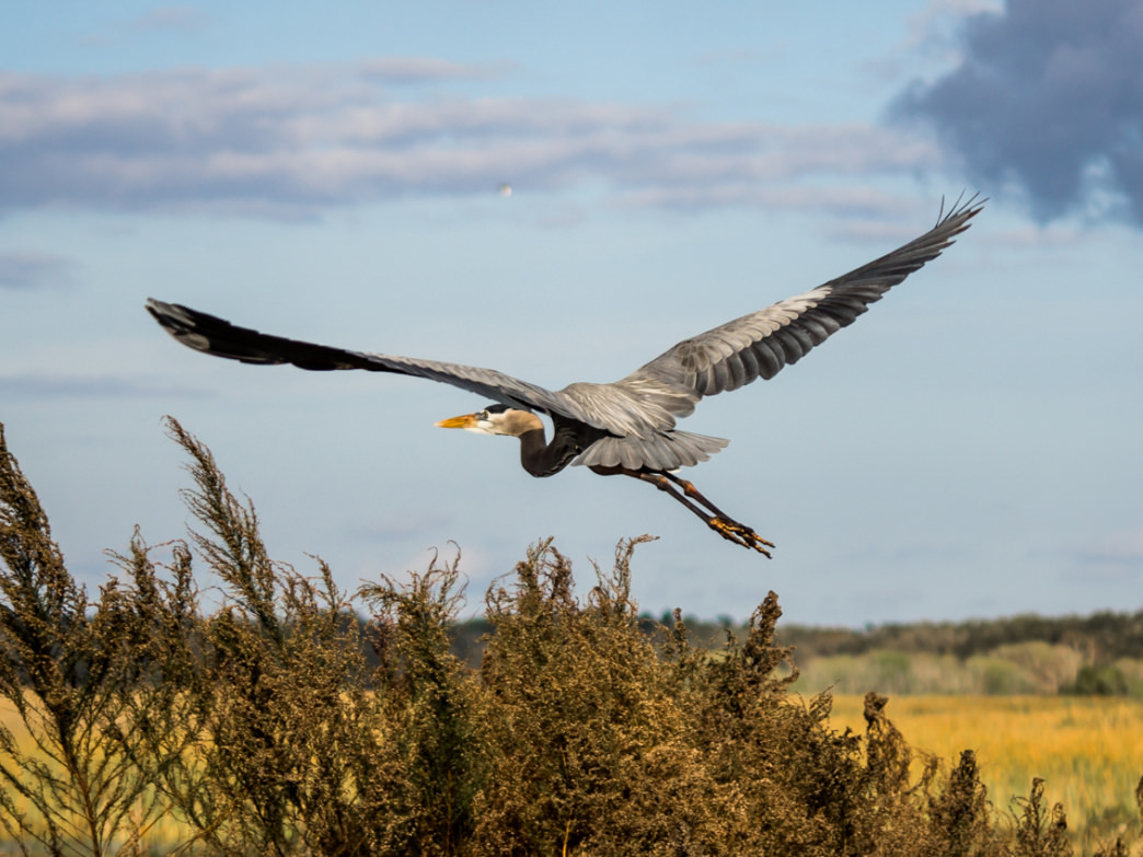 You'll find a wide variety of bird life while paddling the Kissimmee Chain of Lakes.