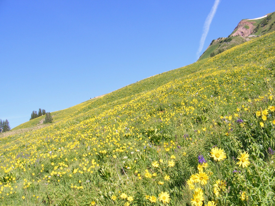 Entire hillsides are blanketed in single hues along the Aspen to Crested Butte hike.
