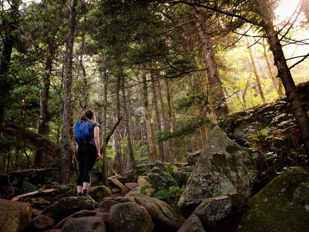 Hike a gentle climb through the meadows of Grandfather Mountain's western flanks on the 3.1-mile Profile Trail.