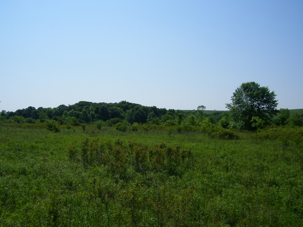 You get a wide variety of terrain at the Green Valley Forest Preserve