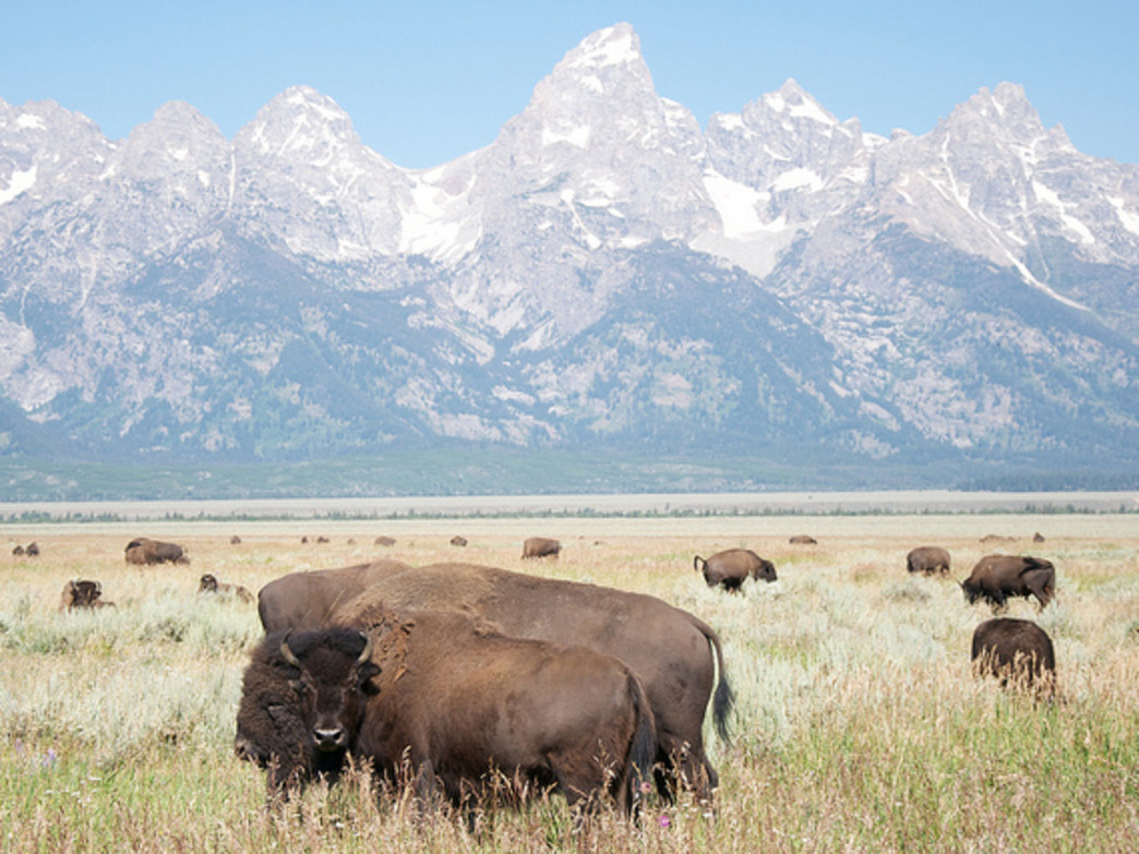 You'll likely share some space with bison on your way out to Kelly.