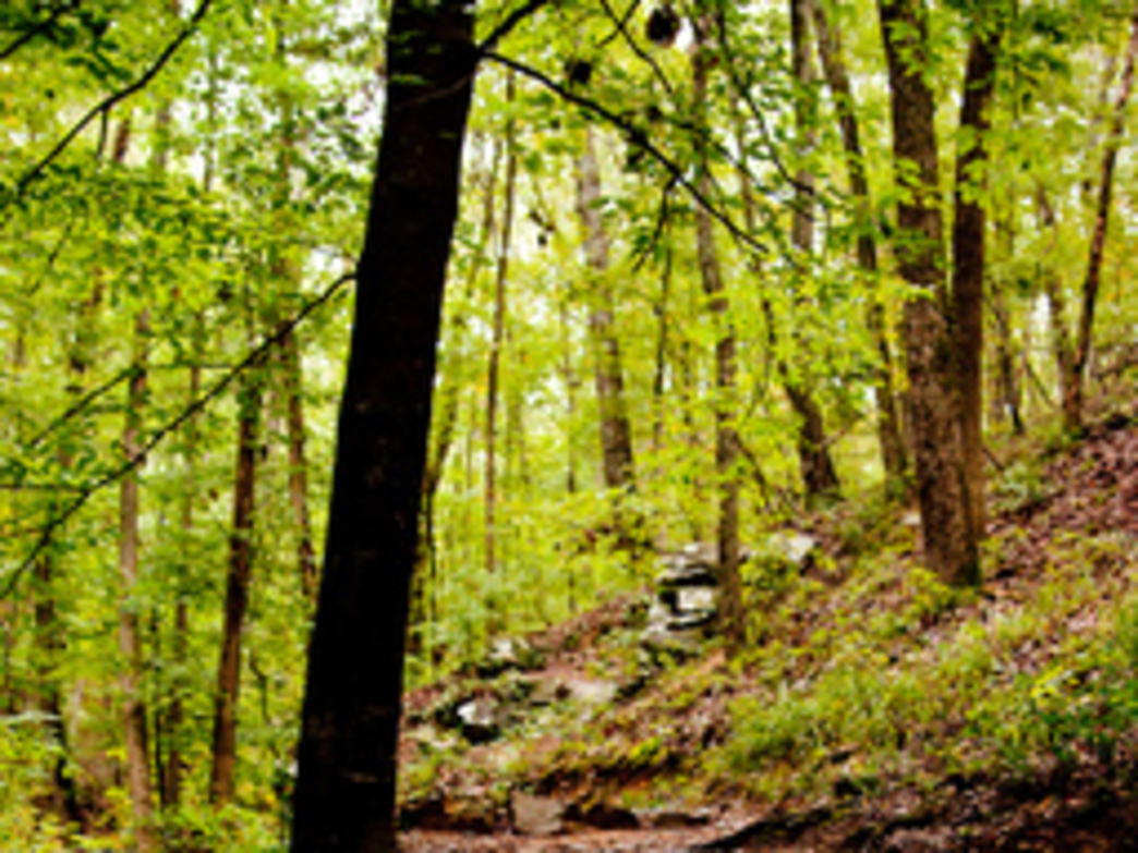 Oak Mountain State Park offers several trails to escape the crowds.