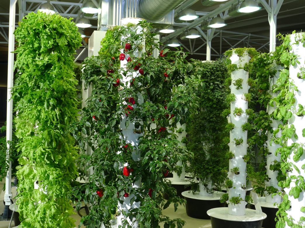 ORD in Chicago has taken healthy offerings to new heights with its Airport Vertical Farm.