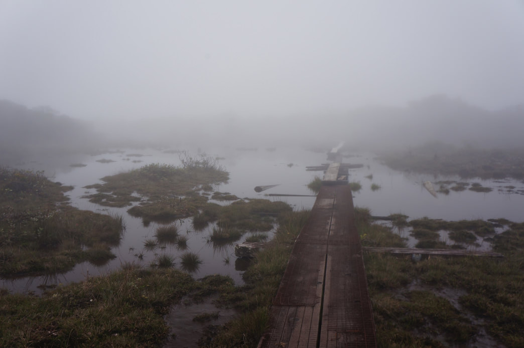 "Boardwalks stretching into the eerie Alakai ""swamp."""