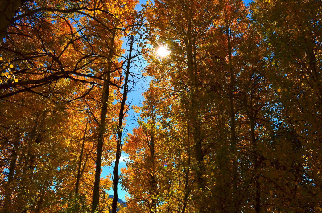 Hiking through Hope Valley offers an immersive fall color experience. Aaron Hussmann