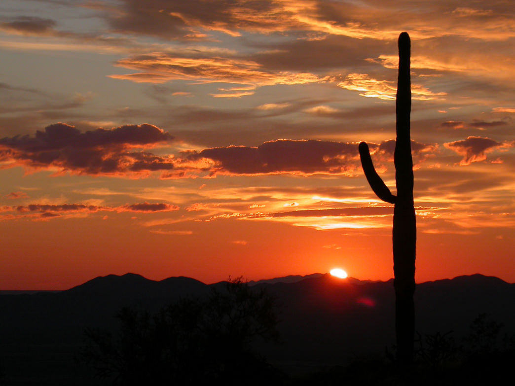 Saguaro National Park.