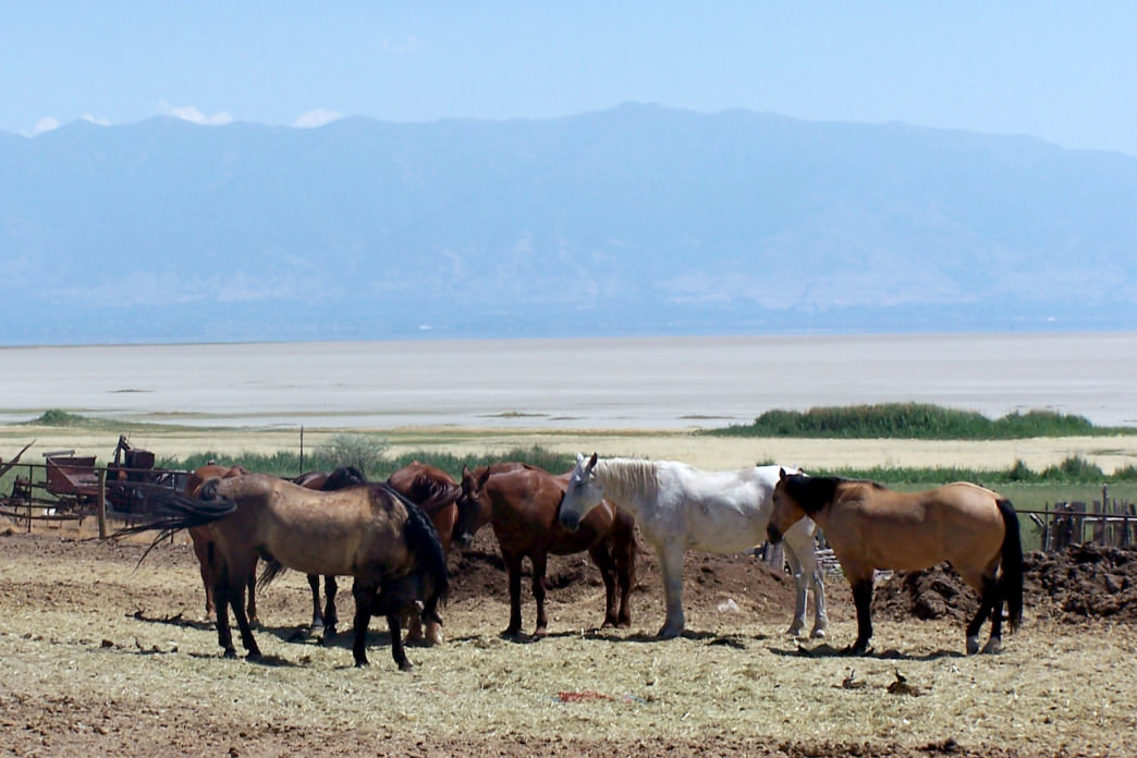 You can tour Antelope Island State Park on horseback.