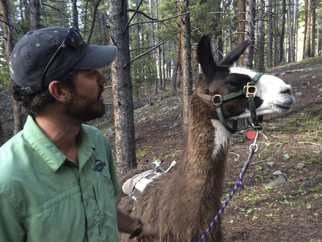 Will Elliott of Paragon Guides gives a llama briefing prior to hitting the trail.