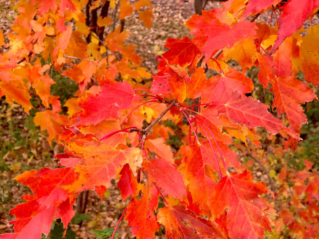This 740-acre park offers beautiful fall colors right in the city.
