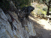 Image for Rustic Canyon Trail