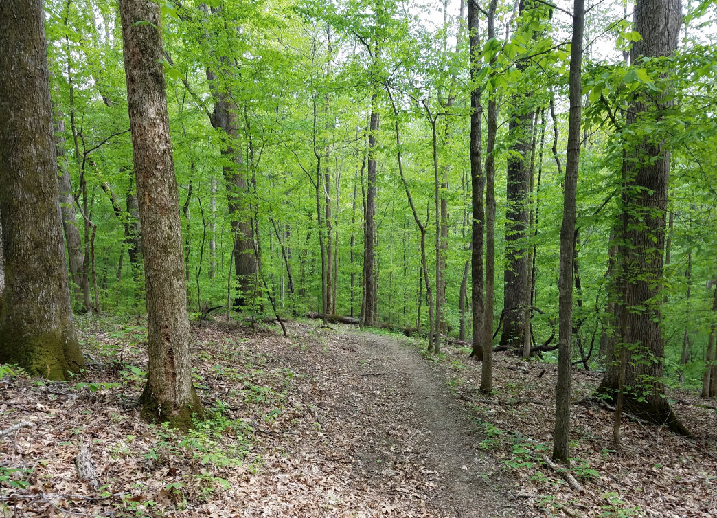 The Horse Trail meanders through the hardwood forests.     Ryan Hall