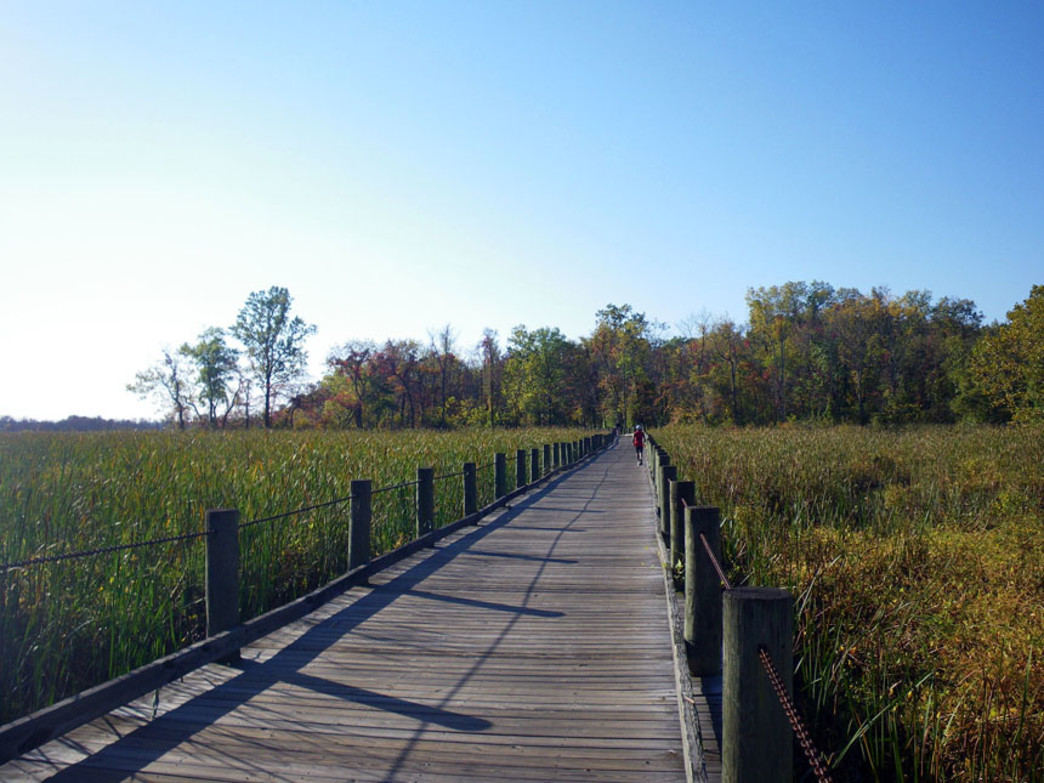 Plenty of solitude to be found on the path along Dyke Marsh on the Mount Vernon Trail