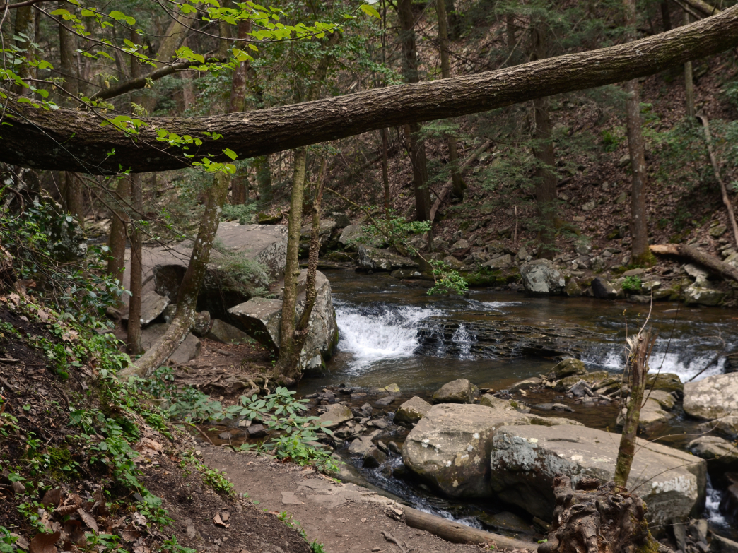 Hiking along Daniel Creek to Hemlock Falls.