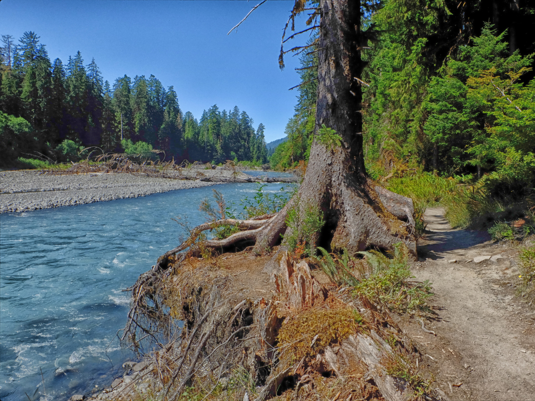 The Hoh River in Olympic National Park