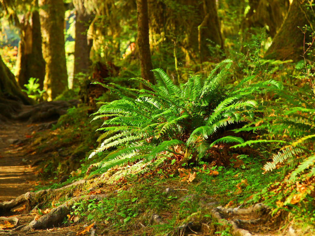 The splendor of a temperate rain forest