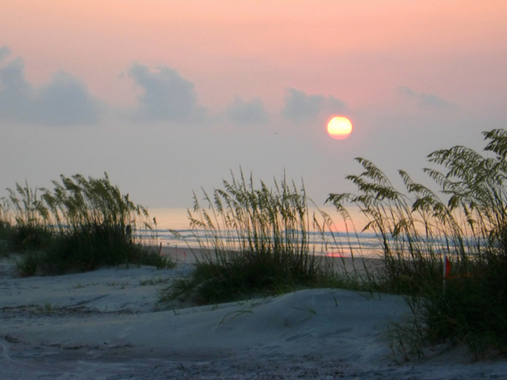 A view of the sunrise through sea oats