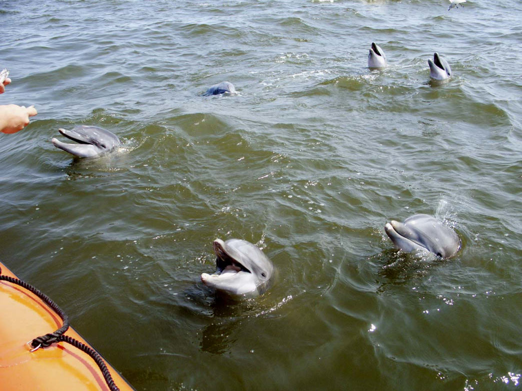 Paddling along the Gulf Coast is one of the best ways to see dolphins in the wild.