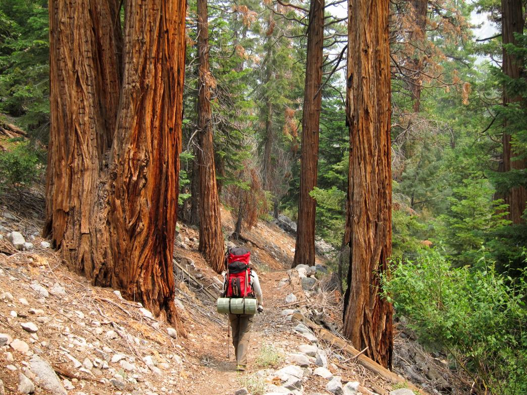 Into the woods in Sequoia National Park.