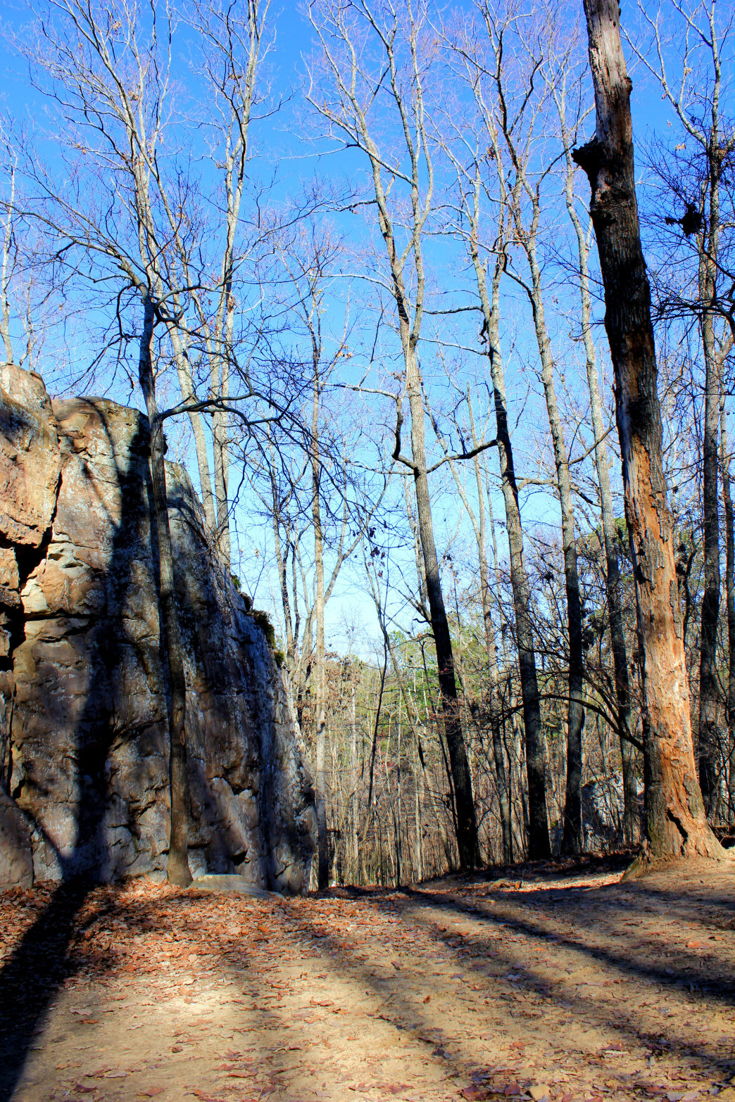 There are many trails to hike and explore at Moss Rock Preserve.