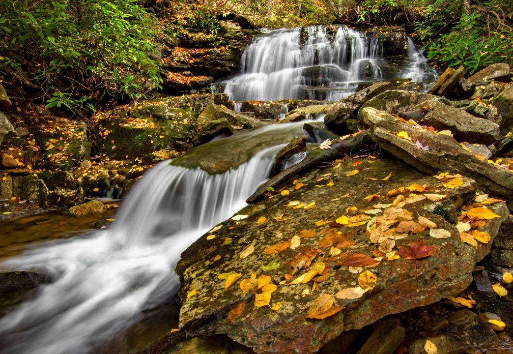 Dolly Sods is a wonderful spot for taking in fall colors.     Anne Johnson