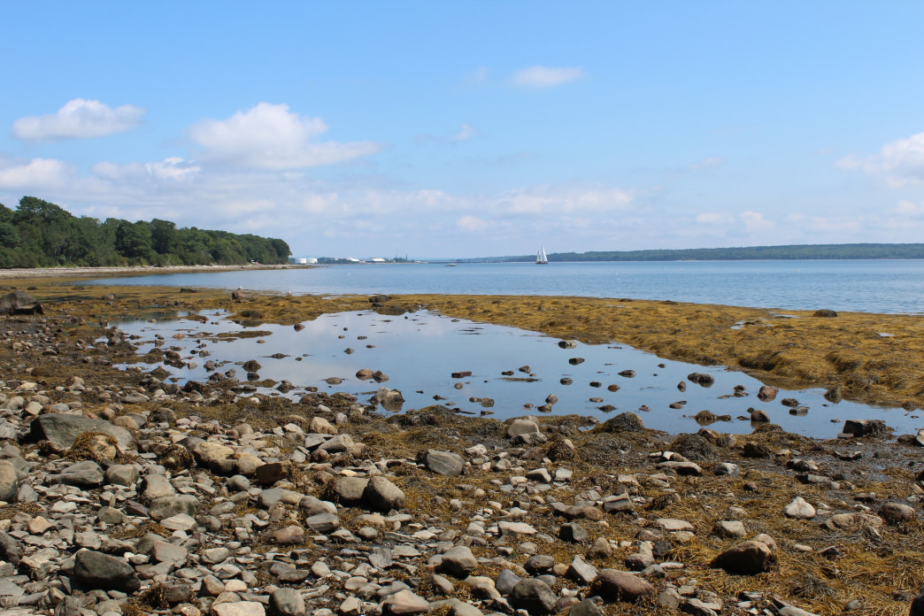 Explore the many tidal pools around Searsport.