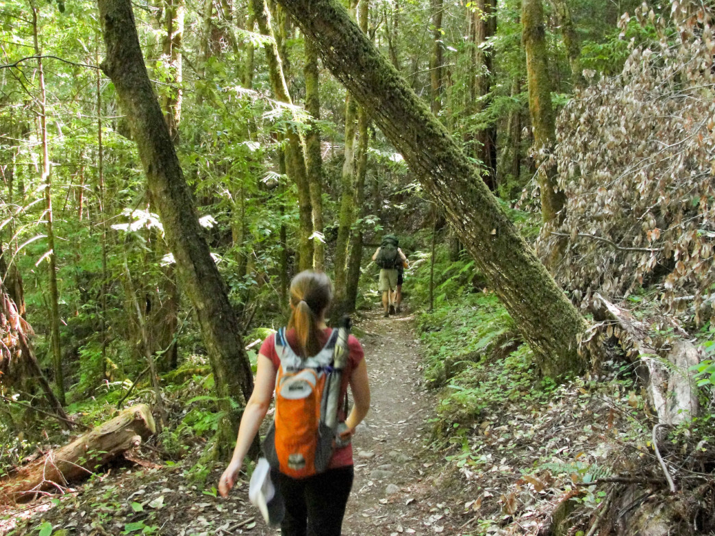 Hikers make their way along the 31-mile Skyline-to-the-Sea Trail in Santa Cruz.