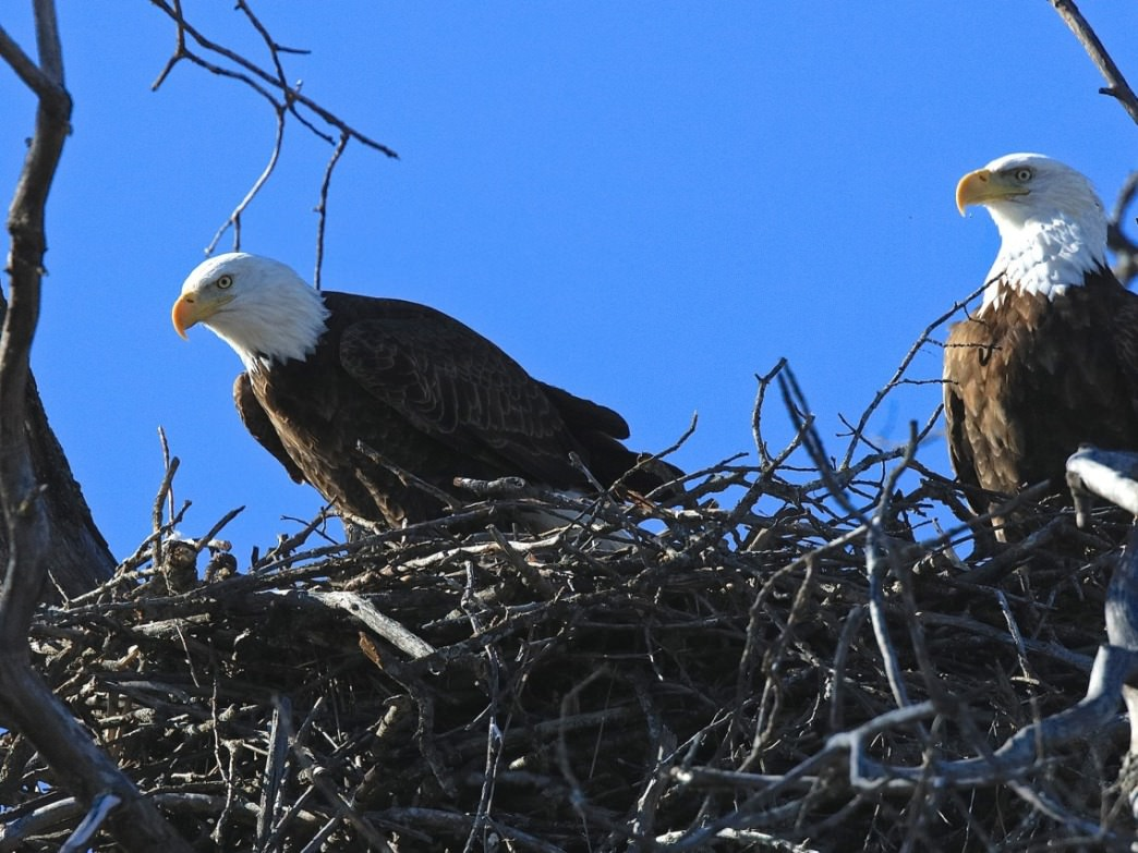 Bald eagles are just one of the species of birds that find a home in the refuge.