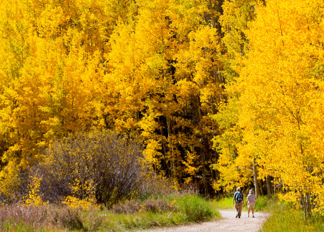 The trees take on a golden color near the Ashcroft ghost town.
