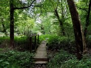 20170609_Tennessee_Chattanooga_Audubon Acres_Hiking6