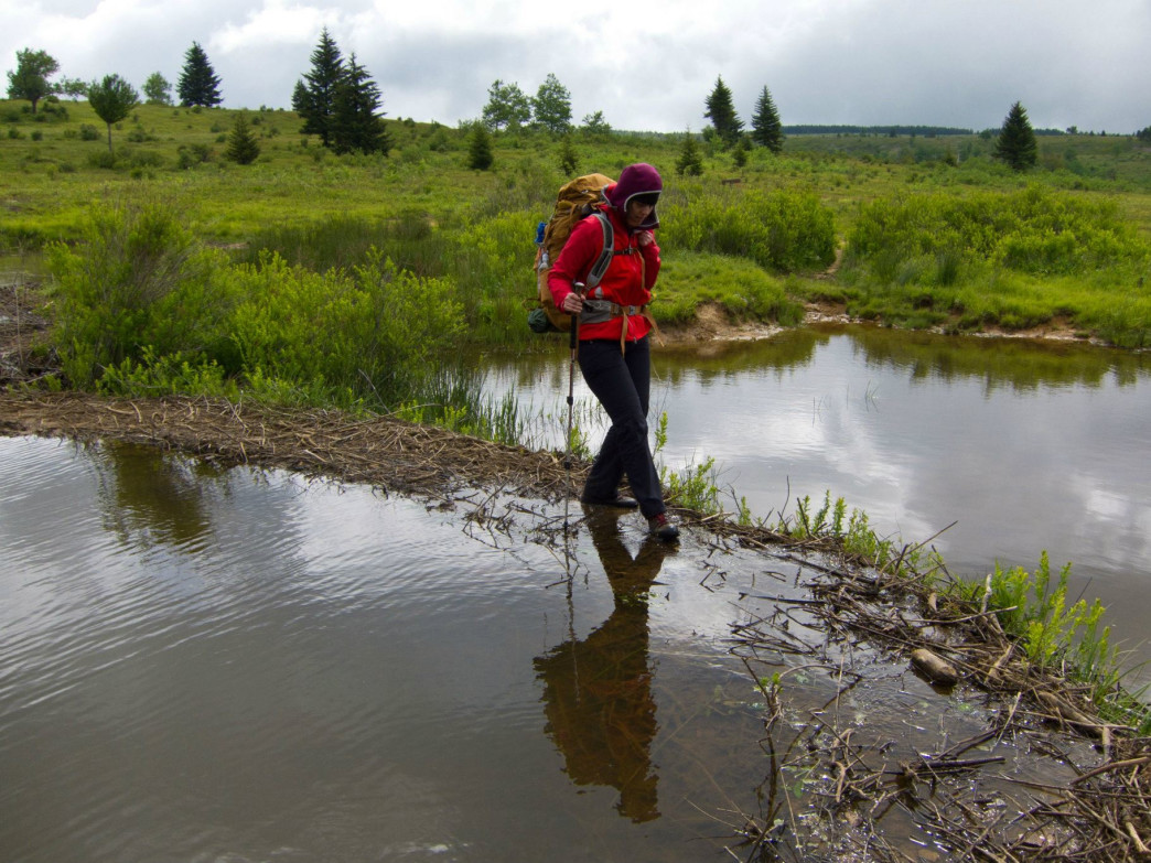 Crossing through a boggy area near the headwaters of Red Creek.