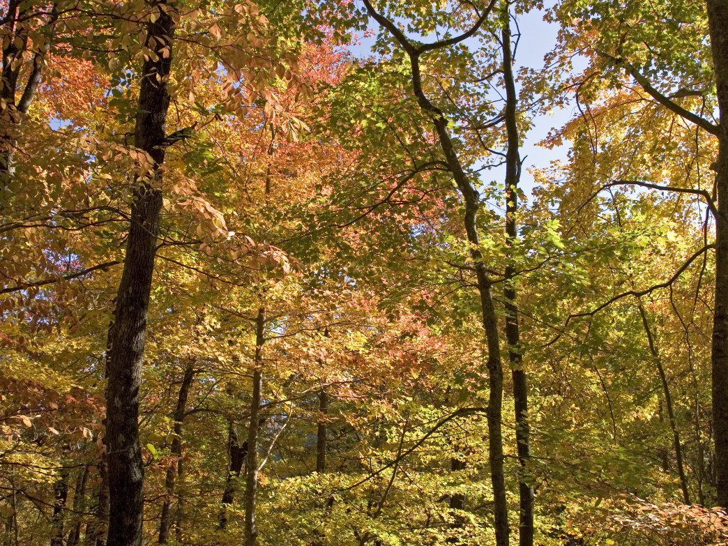 Fall foliage on the Coosa Backcountry Trail.