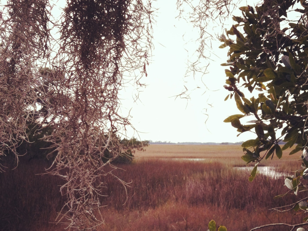 Folly Beach Marsh is filled with hidden trails.