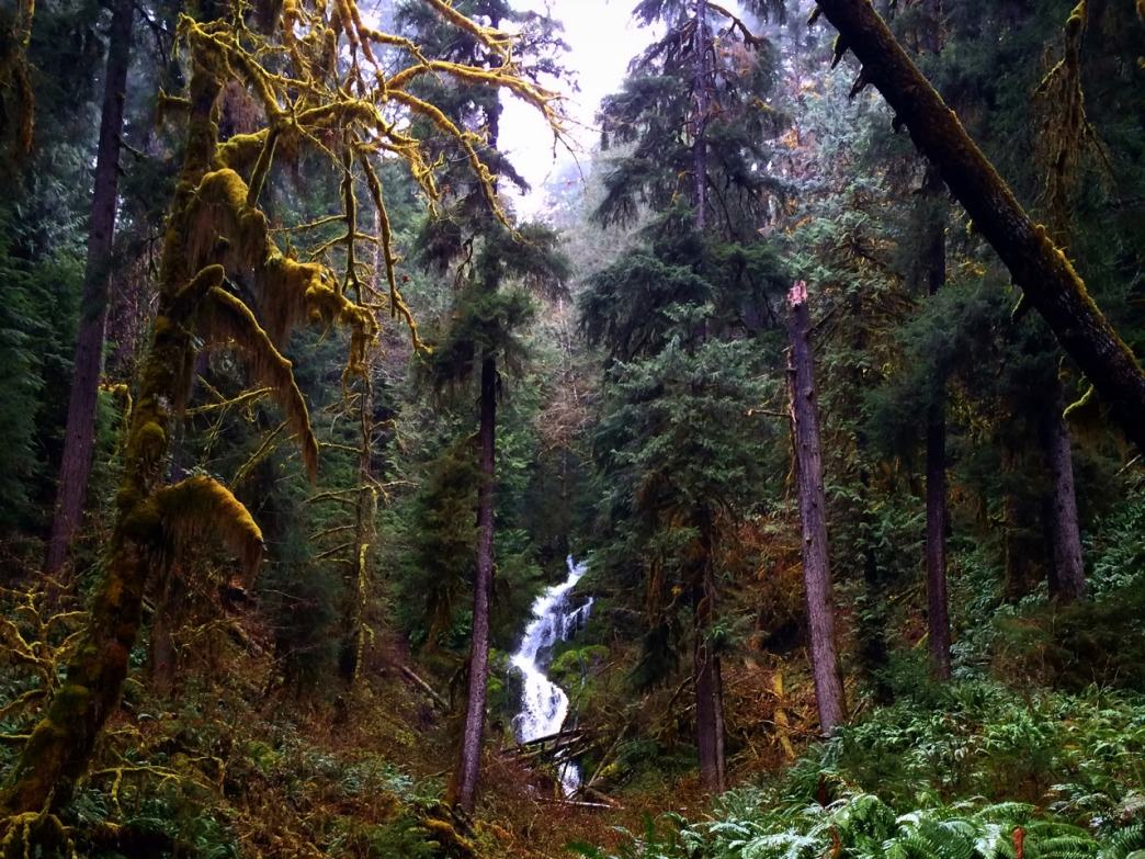 This Olympic oasis is the most-famous temperate rain forest in America
