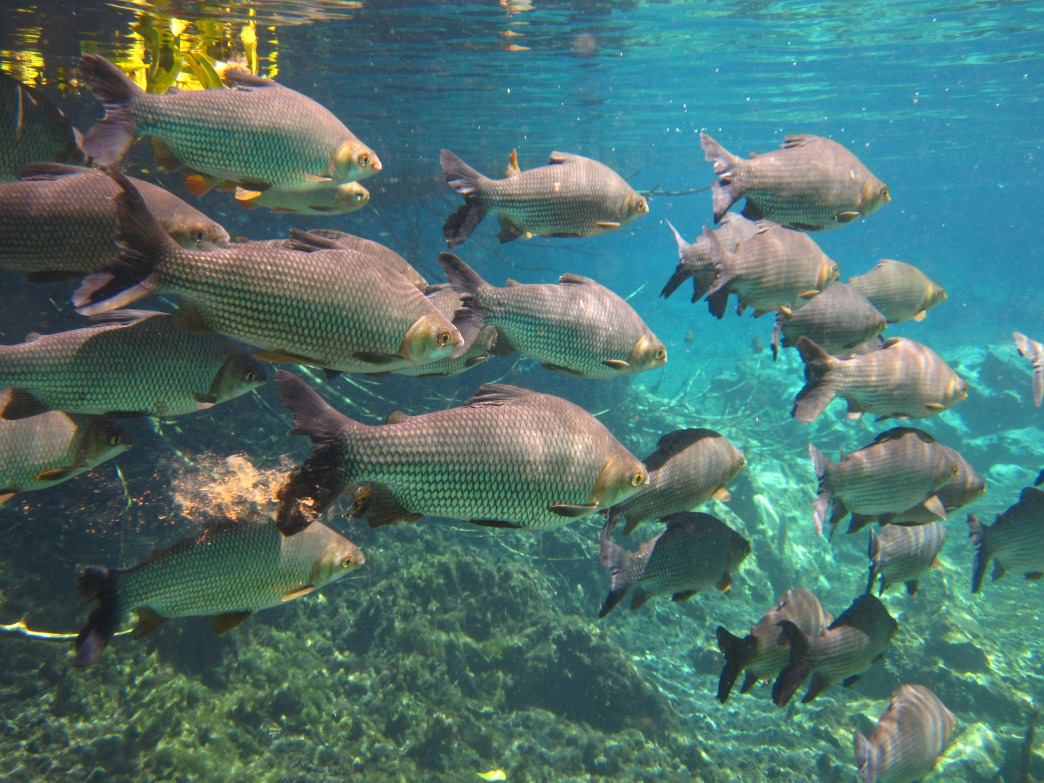 The river's crystalline waters make snorkeling sublime.