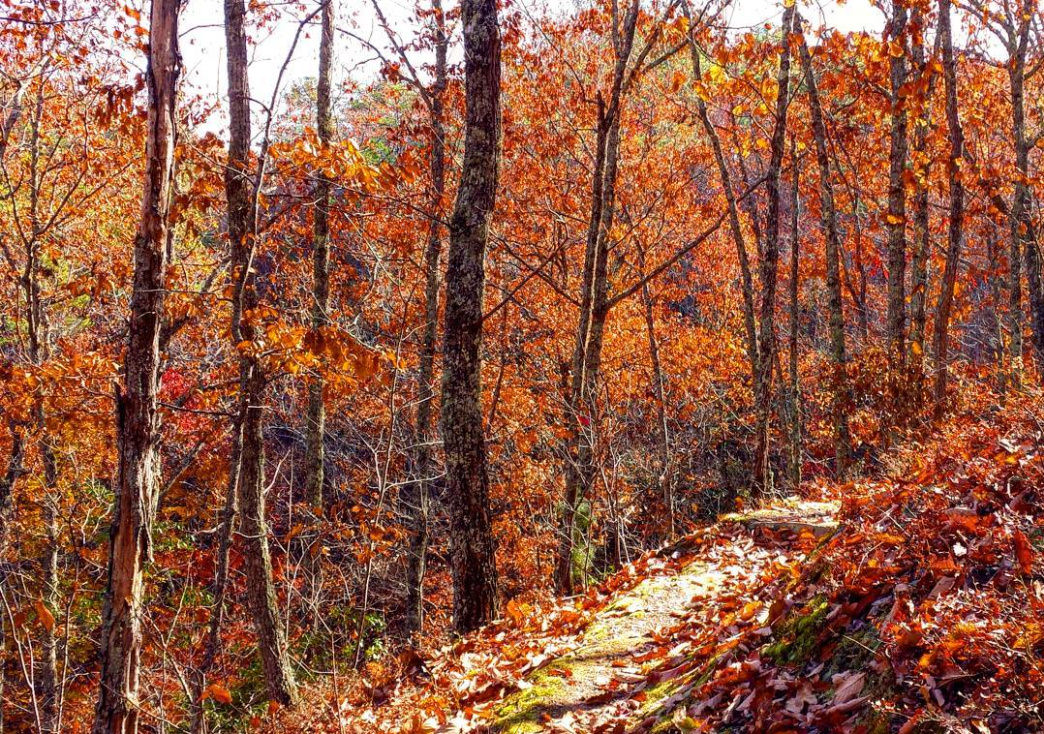 The Alabama section of the trail in autumn has colorful leaves that almost glow in the afternoon sunlight.