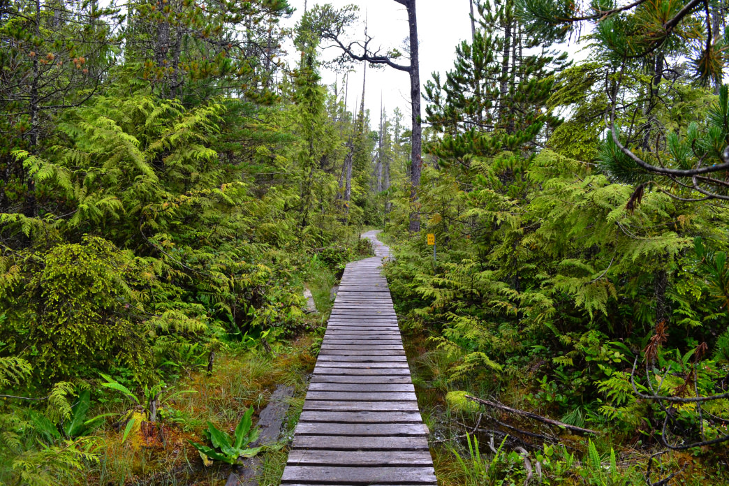The West Coast Trail, in British Columbia, is one of the most stunning hiking spots on the continent.