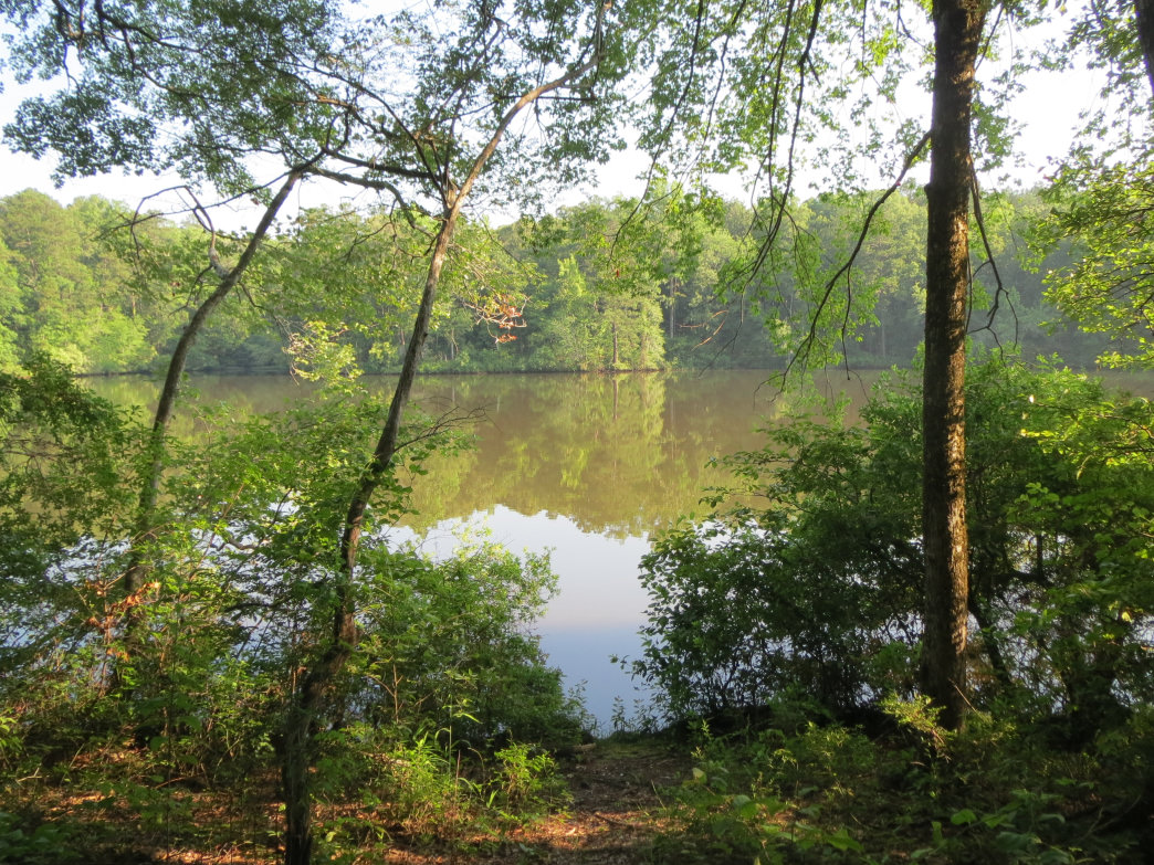 You'll get a good view of Coon Creek from the Wood Duck Trail at Forever Wild's Coon Creek Tract.
