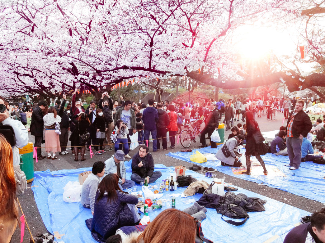 Hanami honors the springtime cherry blossom bloom.