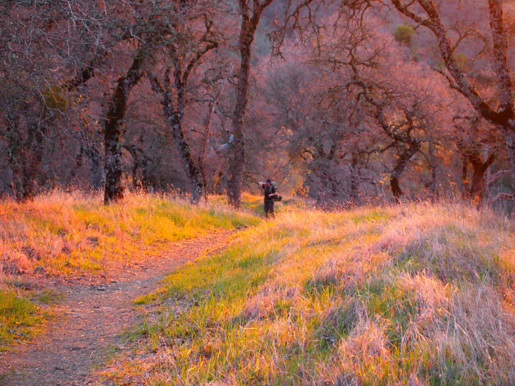 The golden hour in Henry Coe State Park.