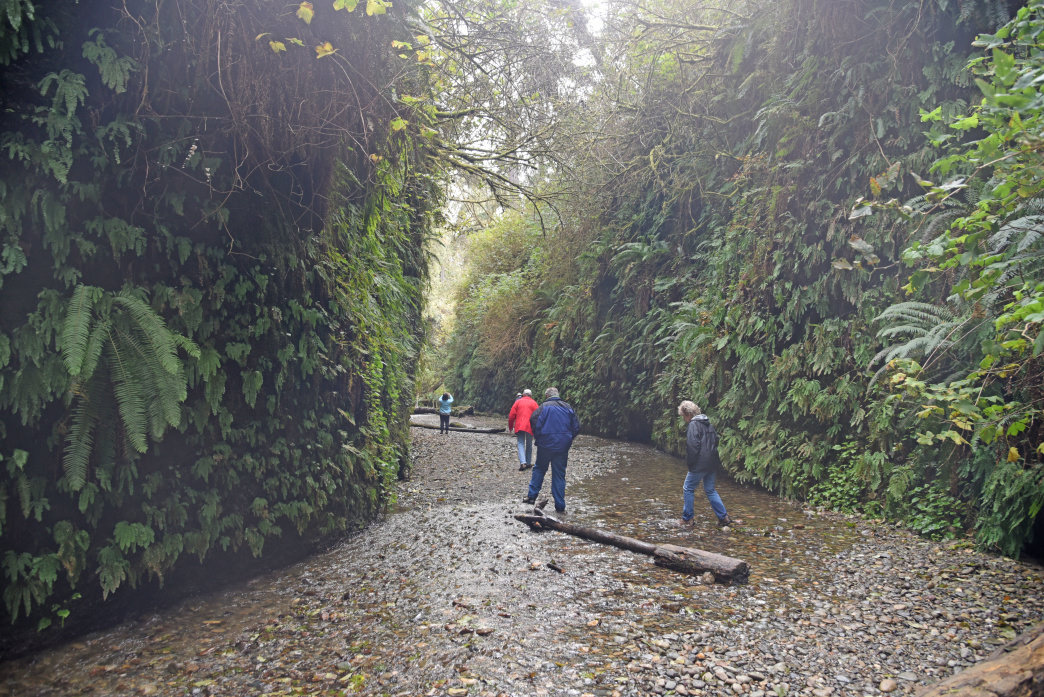 Hikers exploring the primordial passage of Fern Canyon.