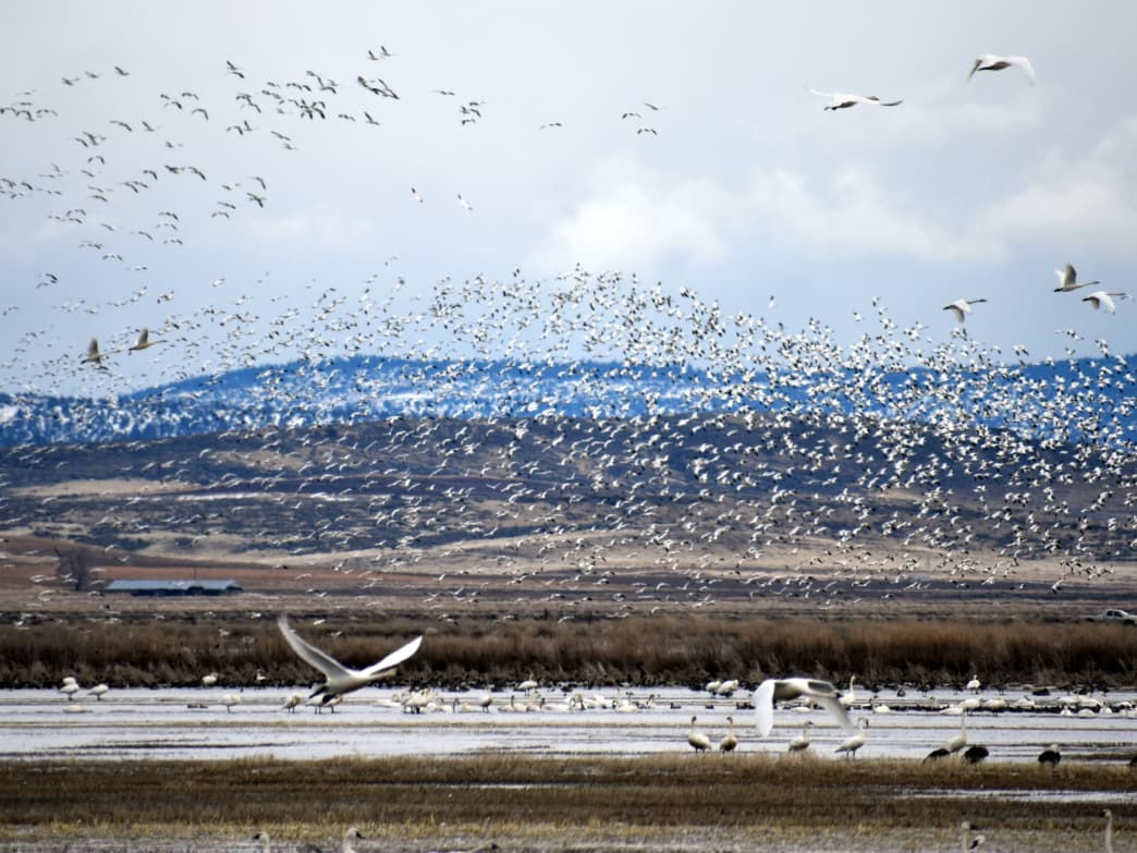 Klamath County, Oregon, is one of the country's top destinations for birdwatching.