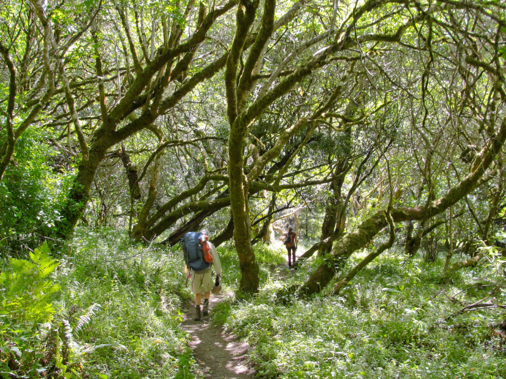 The 31-mile Skyline-to-the-Sea Trail is one of the most beloved in the Bay Area.