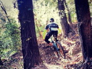 Image for Stringers Ridge Mountain Biking