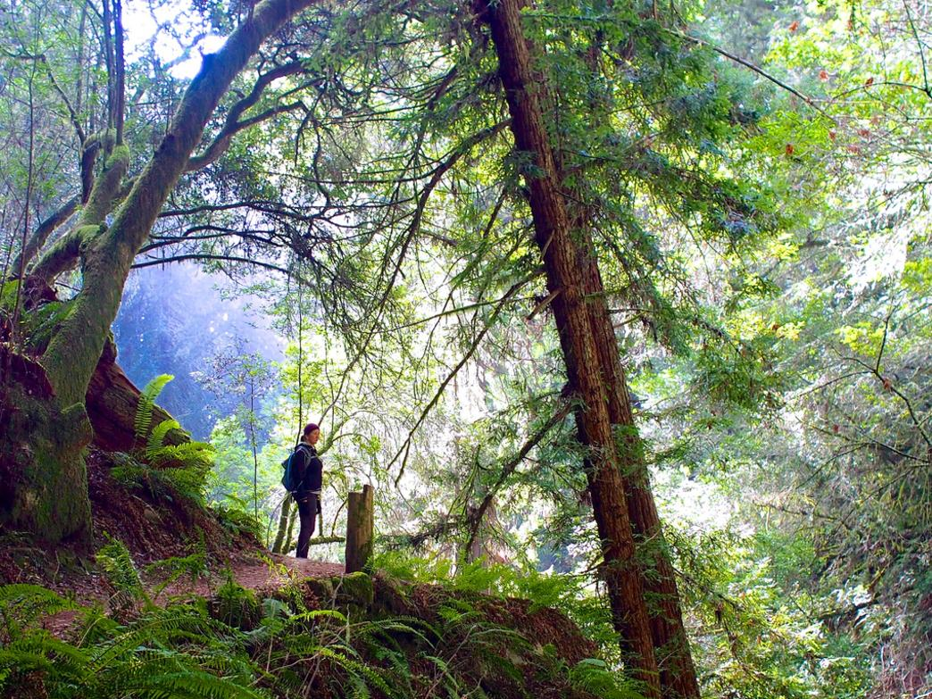 The 7-mile Dipsea Trail takes hikers through stunning wilderness.