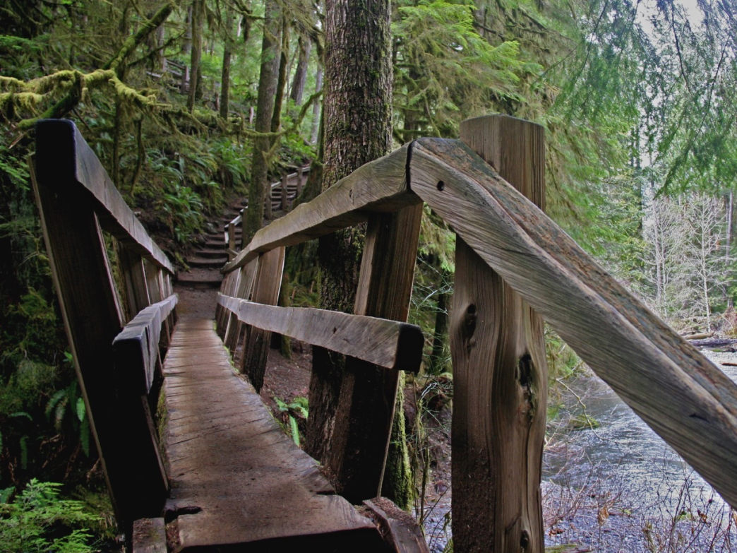 The old wooden bridge leading to Marymere Falls in Olympic National Park