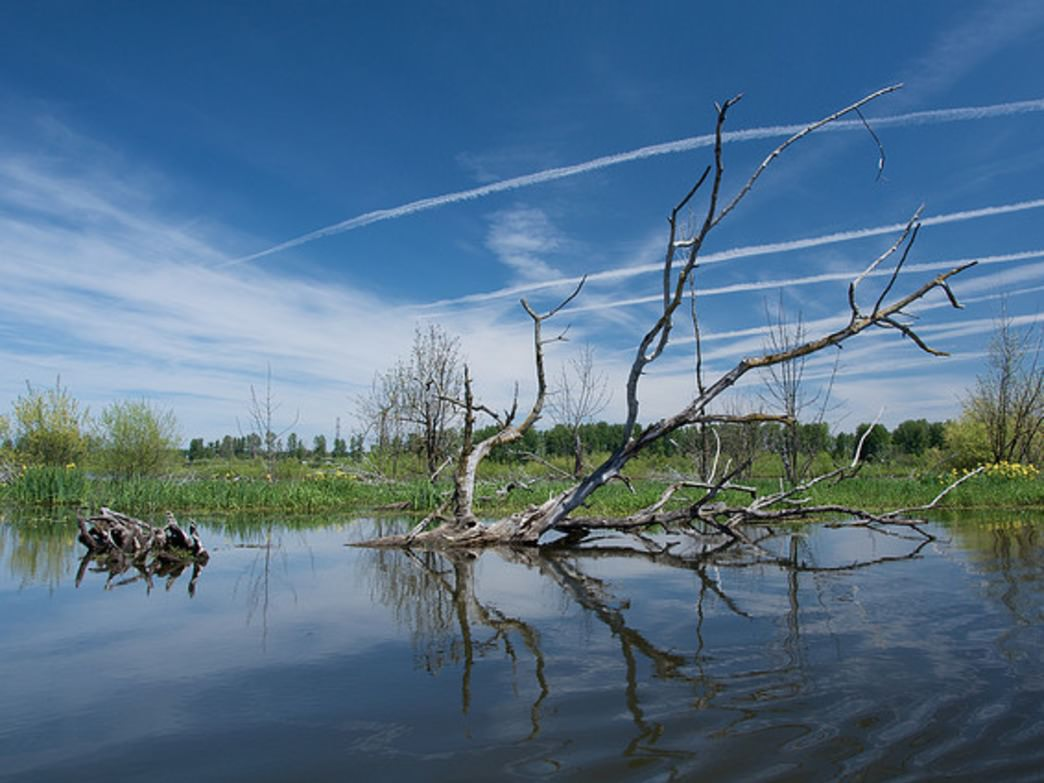 The Smith & Bybee Wetlands Natural Area is part of the North Portland Loop.