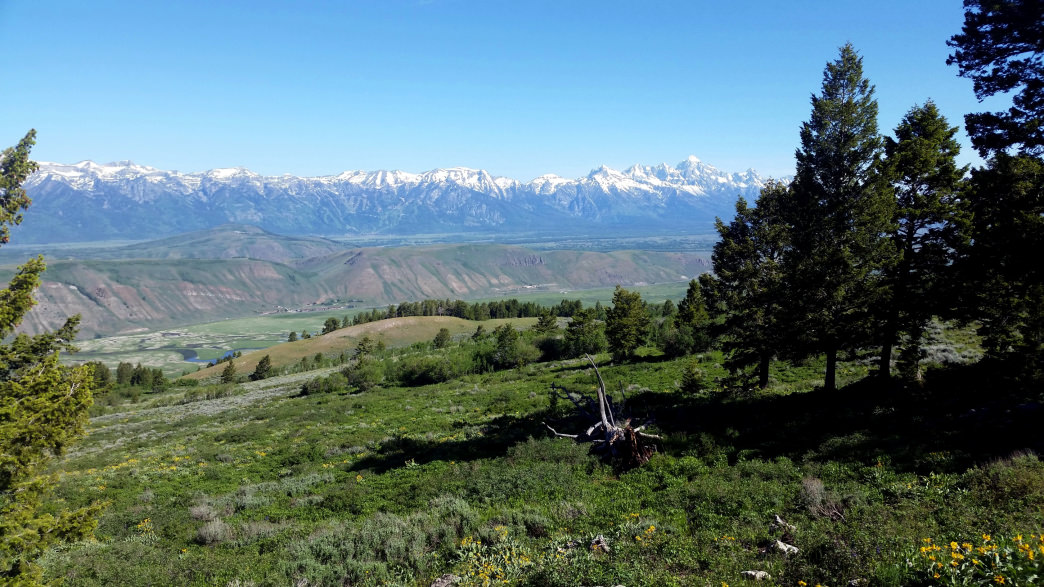 Crystal Butte Trail is a secret in-town hike with the best views of Jackson and the Tetons.     Dina Mishev