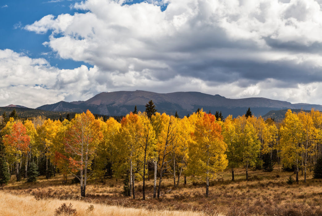 Mueller State Park's colorful aspens are juxtaposed against high-mountain views.